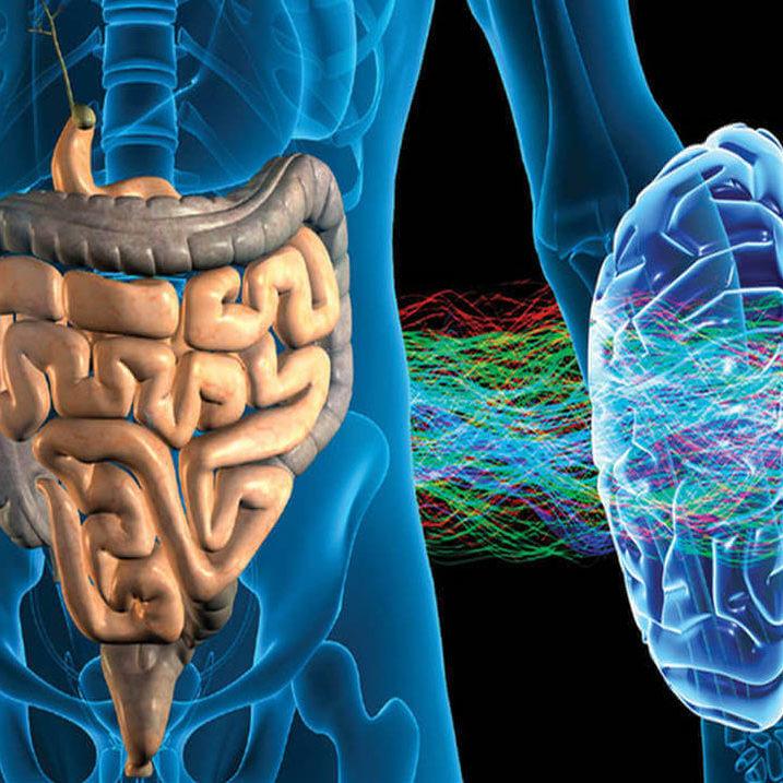 Gut-Brain-1