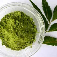 What Are the Benefits of Neem Powder?