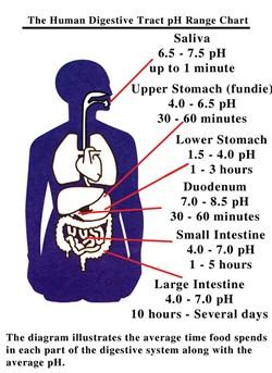 pH in the Body