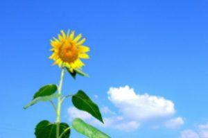 vibrant-health-natural-healing