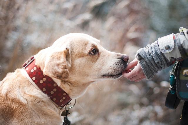 pet health naturally